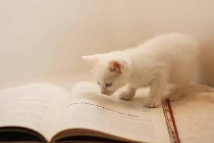 まとめ|読書感想文代行は、他の宿題代行と併せてやるのにオススメの副業